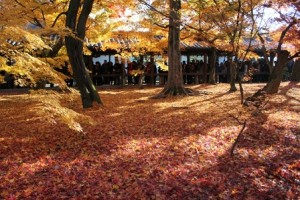 東福寺 散り紅葉