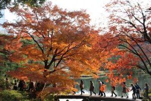 六義園 紅葉 観光客