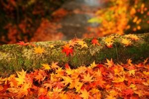 降り積もった紅葉と苔むした倒木