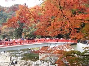 香嵐渓 紅葉 待月橋