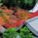 京都大原三千院の紅葉2017。見頃とライトアップ。駐車場は?