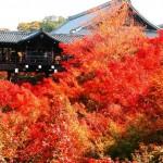 東福寺の紅葉2016の見頃と混雑時間。ライトアップの場所は?