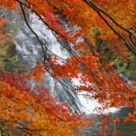 養老渓谷の紅葉2016。見頃時期とライトアップ時間。コースは?