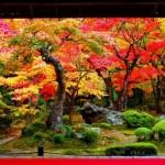 嵐山紅葉2016の見頃時期とライトアップ時間。トロッコ予約方法。