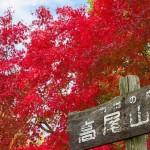 高尾山紅葉2016の見頃と見どころスポット。もみじまつりは?