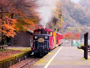 嵯峨野トロッコ列車 紅葉
