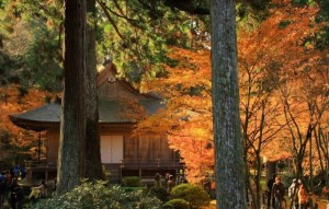 京都大原三千院 紅葉