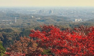 高尾山 紅葉越しの街並み かすみ台展望台