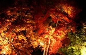 養老渓谷 紅葉 ライトアップ