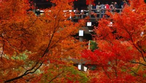 東福寺 洗玉澗