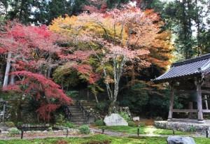 勝林院 紅葉