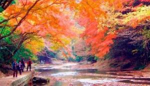 養老渓谷 紅葉 ハイキングコース
