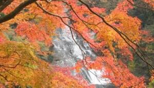養老渓谷 紅葉 滝巡りコース