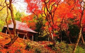 三千院 紅葉