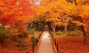 嵐山 紅葉