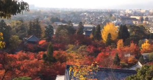 永観堂 多宝塔から見る紅葉と街の風景