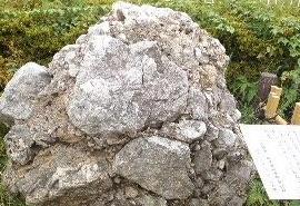 明治神宮 さざれ石