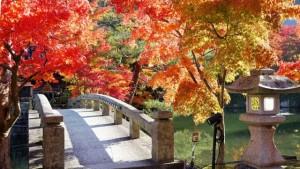 永観堂の橋と紅葉