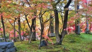 永観堂 紅葉と苔むした地面