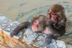 お風呂に入るお猿さん 毛づくろい