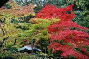 南禅寺 紅葉と黄葉