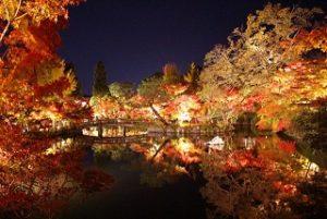 永観堂 ライトアップされた紅葉がきれいに写り込んだ放生池