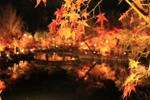 永観堂 紅葉のライトアップ