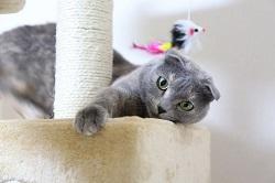 一人暮らし 猫