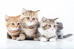 猫 キレイ好き
