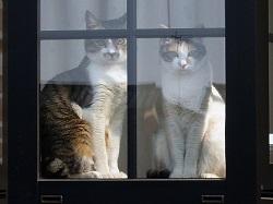 猫 お家の中