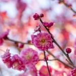 立春の候の時期はいつからいつまで?挨拶例文や読み方。