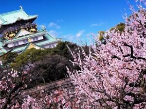 大阪城 満開の梅