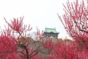 大阪城と梅のコラボ