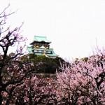 大阪城公園梅林2019の見頃と開花!屋台やライトアップは?
