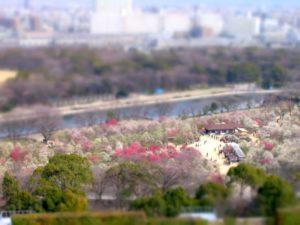 大阪城公園 梅林景色
