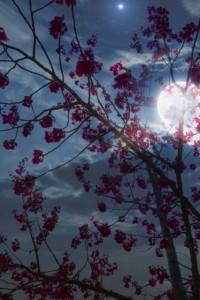 梅 夜 月