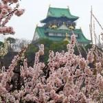 大阪城梅林公園2017の開花状況と見頃。場所やアクセスは?