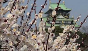 大阪城梅林公園