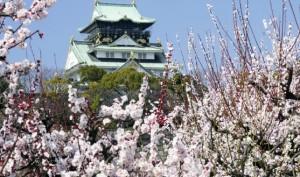 大阪城 梅 コラボ