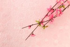 梅の花 枝