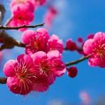 立春大吉の意味。お札の貼る場所や期間。古いお札の処分方法。