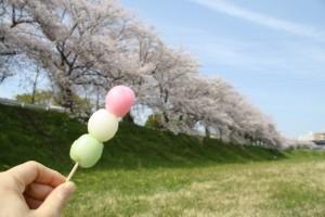 桜 お花見 三色団子
