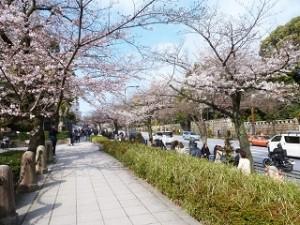 千鳥ヶ淵 桜 人混み