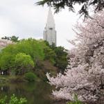 新宿御苑の桜2021の見頃と開花!ライトアップは?混雑や駐車場は?