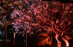 夜梅祭 水戸