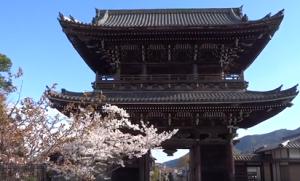嵐山 清涼寺 桜