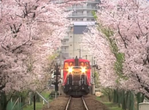 嵐山 トロッコ列車 桜