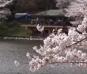 三ツ池公園 桜 売店