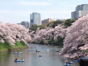 千鳥ヶ淵 桜 満開 ボート