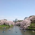 千鳥ヶ淵の桜2020の見頃と開花!ライトアップやボートは?駐車場は?